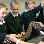 A woman wearing a face visor holding a large snake where children begin to touch the snake